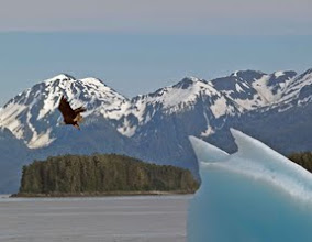 Photo: Eagle at Tracy Arm