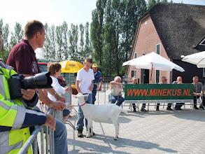 Photo: Klasse 2: witte lammeren geboren in januari 2013.   1d. Nooro's Femke 42.