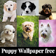 Download Puppy wallpaper free For PC Windows and Mac