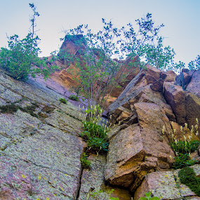 Living on the Edge by Andrew Brinkman - Nature Up Close Rock & Stone ( cliffs, nature, plants, flowers, leaves, rocks )