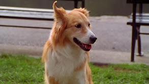 Murray at the Dog Show thumbnail