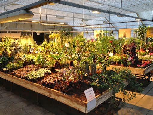 50% på växter