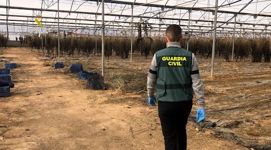 6.000 plantas de cannabis y 220 kilos de cogollos en una plantación de cáñamo