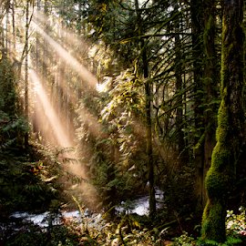 by Keith Sutherland - Nature Up Close Trees & Bushes ( moss, sun light, forest, blue, nature, river, sun streaks )