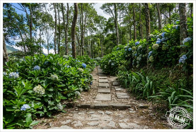 青山農場繡球花步道