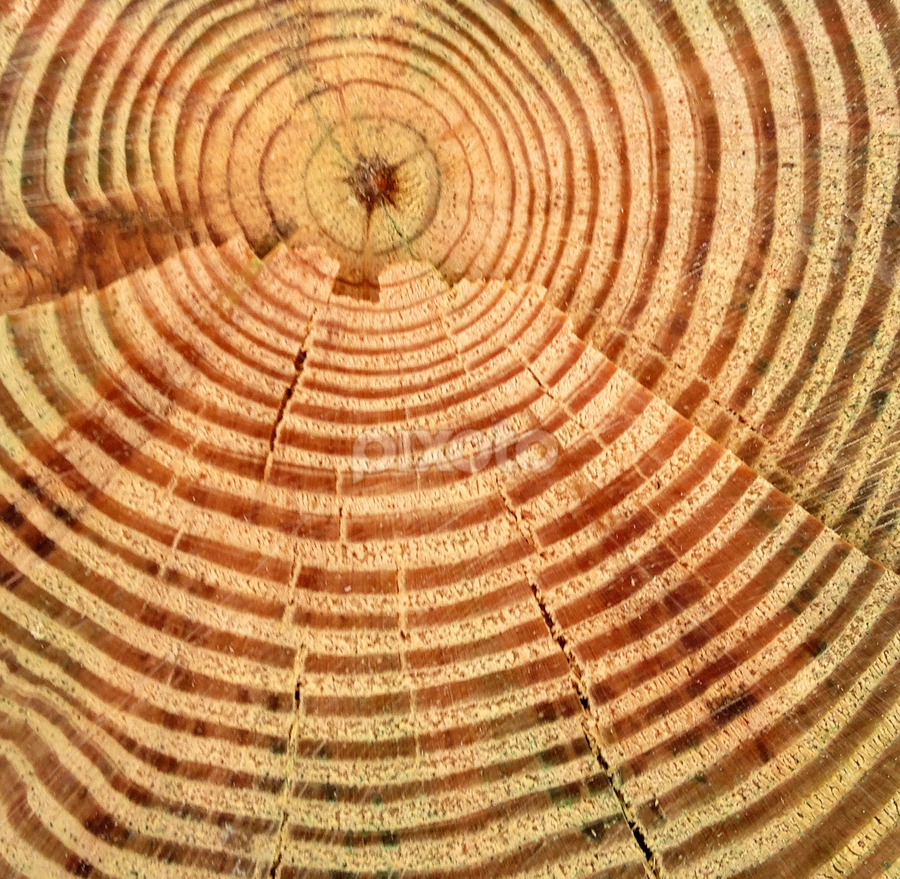 Natural Energy by Eric Eldritch - Artistic Objects Other Objects ( ray, wood, rings, solar, log, sun, circle, pwc79 )