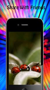 Ladybug Wallpapers - náhled