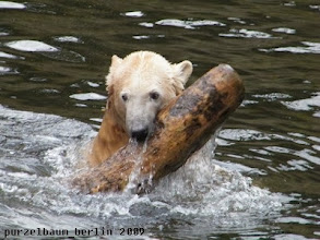 Photo: Wasserspass mit dem Baumstamm ;-)