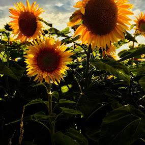 My photo journal Austria Summer 2018 by Ray Anthony Di Greco - Flowers Flowers in the Wild