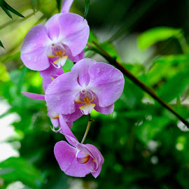 by Victoria Eversole - Flowers Flower Gardens ( pink flowers, orchids, tropical plants, hothouse gardens )