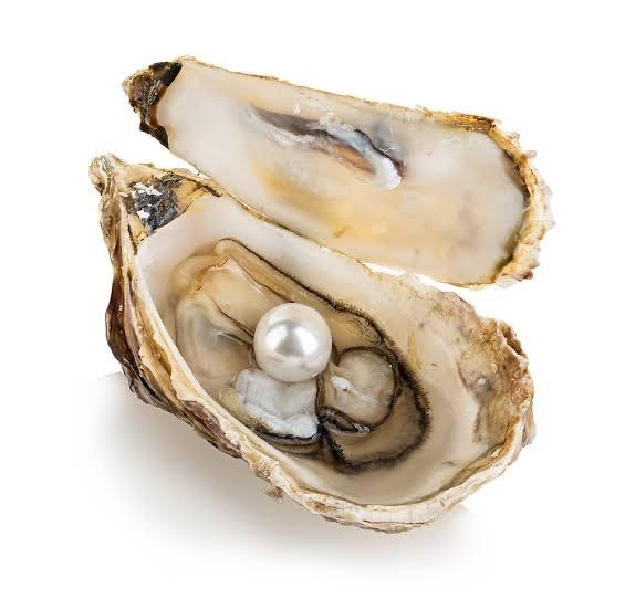 A picture containing shellfish, oyster, table, piece  Description automatically generated
