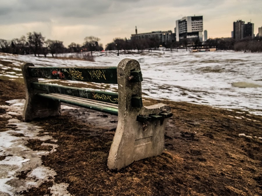Riverdale Park Bench by Chris Vee - City,  Street & Park  City Parks ( winter, park, bench, toronto, wet )