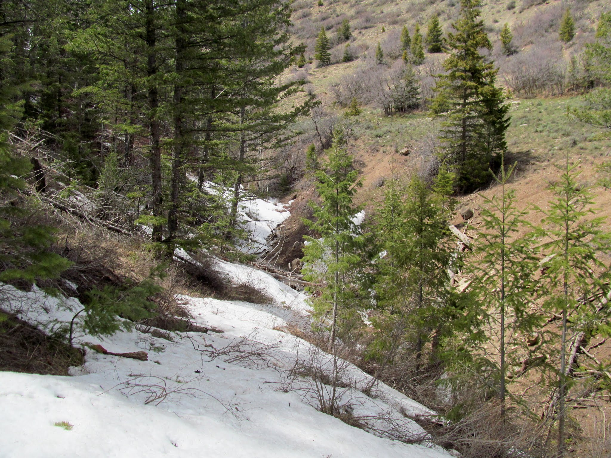 Photo: Snow on the lower trail