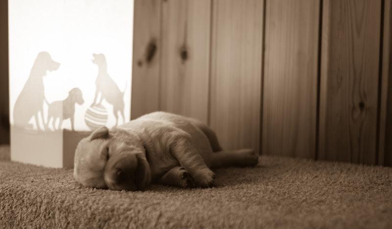 Puppy Dreams di StePh