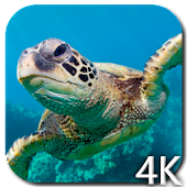 Turtle 4K Video Live Wallpaper