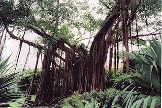 Photo: #019-Jardin botanique de Deshaies