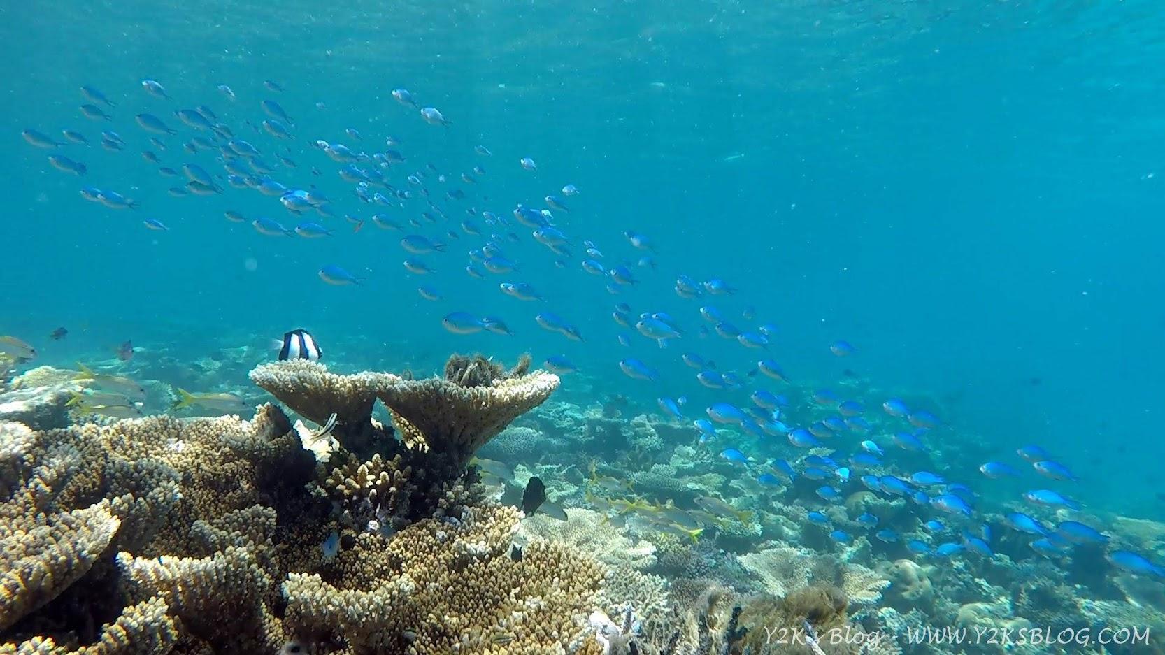 Il coral garden di Tatafa - Ha'apai