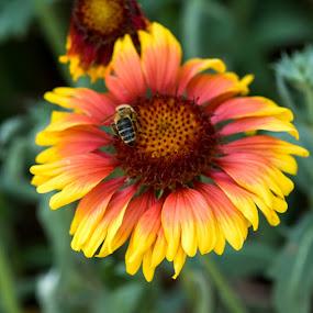 Friendship by Iztok Urh - Flowers Single Flower