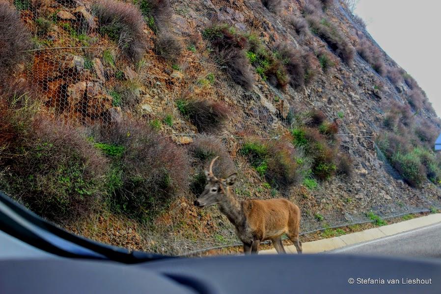 Herten bergen Malaga