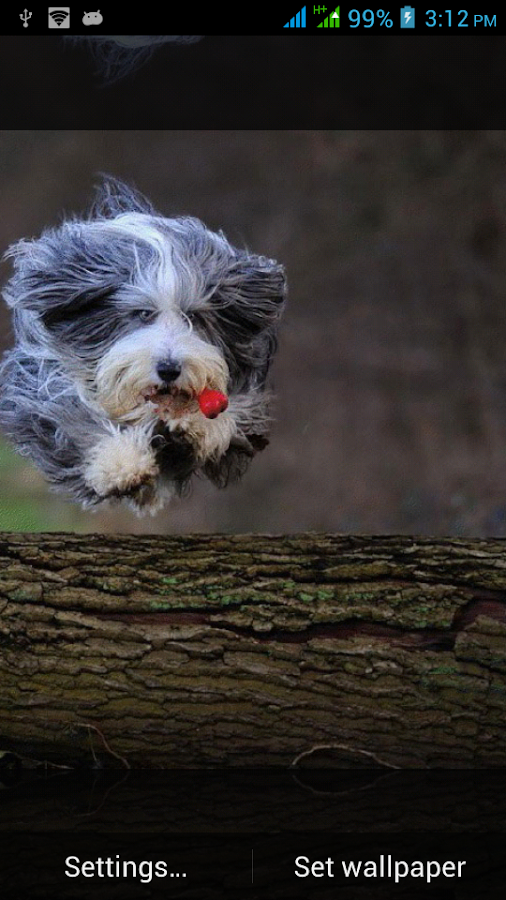 dogs live wallpapers android apps on google play