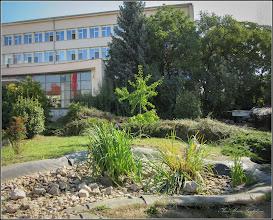 Photo: Turda, Piata 1 Decembrie 1918, plante de apa fara apa, distruse - 2018.09.14