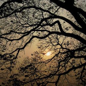 Web........ by Dipan Chaudhuri - Nature Up Close Trees & Bushes