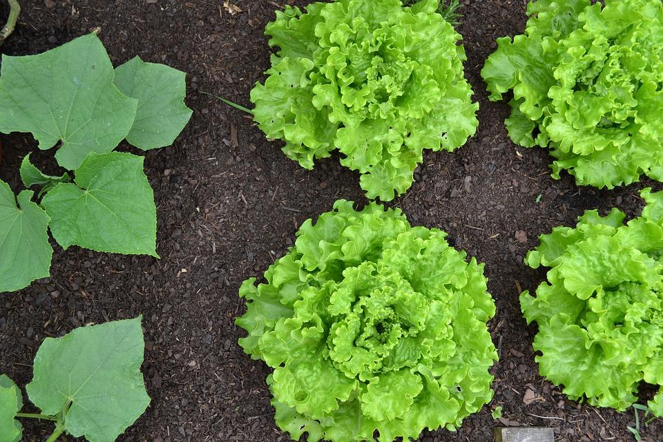vegetable-garden-1533962_960_720.jpg
