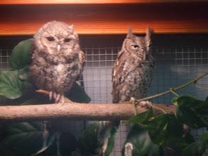 Photo: owls