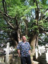 Photo: At 800-year old gingko tree, Tokyo