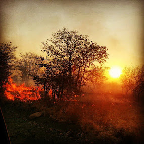 Fire & sunset in the Kruger National Park by Franco van Vuuren - Landscapes Sunsets & Sunrises