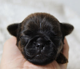 Photo: Hierners Bark At The Moon 10 days old