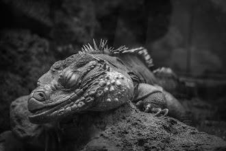 Photo: Ancient Dinosaur