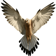 GSM-Falcon