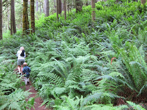 Photo: Giant ferns along the Falls View Canyon trail.