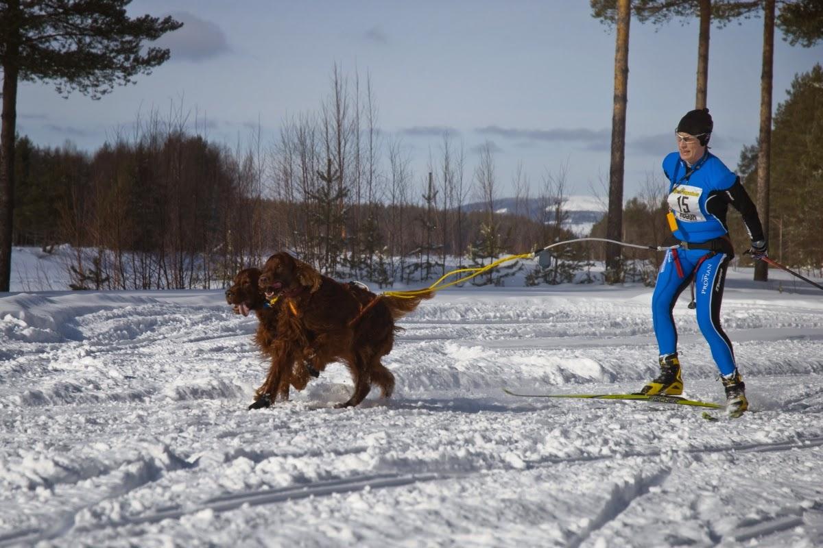 Photo: Vindelälvsdraget 2010, dubbelspann med Lotus, målgång i Vormsele efter drygt 14 km!