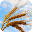 Plains of Wheat Live Wallpaper icon