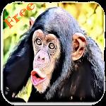 Monkey Sounds Icon