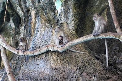Stopover at Monkey Beach