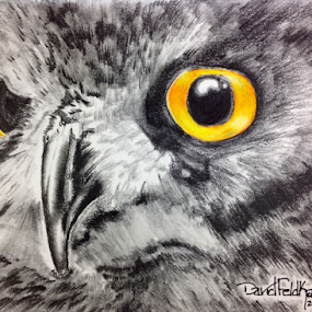 The eyes have it by Dave Feldkamp - Drawing All Drawing ( pencil, graphite, colored pencil, black and white, art, owl, yellow, gray, colored pencils, drawing, gray and white, eyes,  )