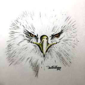 Eagle Eyes by Dave Feldkamp - Drawing All Drawing ( sketch, eagle, black and white, art, bald eagle, white, yellow, feathers, feather, drawing, eyes, bird, pencil, birds of prey, graphite, colored pencil, head shot, beak, black,  )