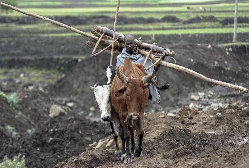 Per un palo...(aratro in legno in Etiopia) di D. Costantini