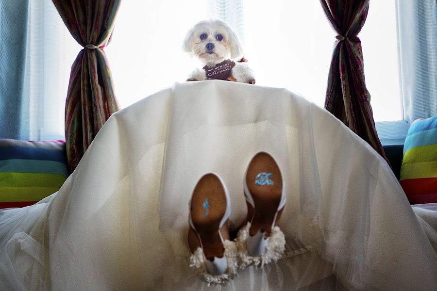 Wedding photographer Sabina Mladin (sabina). Photo of 02.08.2016