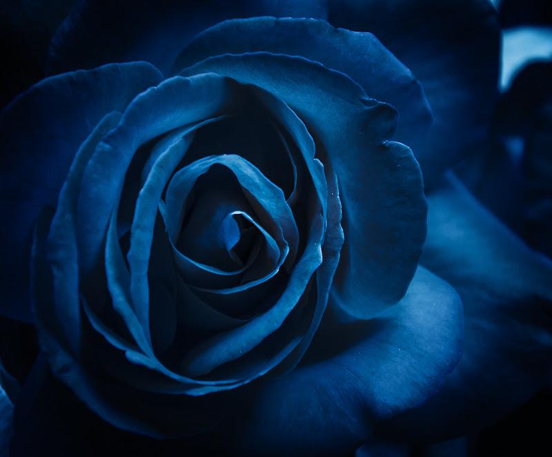 Deep blue di Erato
