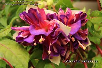 Photo: Bora Bora