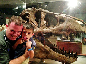 Photo: Three T-rexs at the Museum of the Rockies