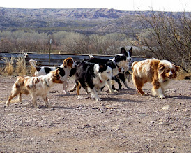 Photo: Cash, Hound dog, Cowgirl, Josey, Pistol, Frenchi, and Ty.