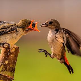 Mom... please come  by Husada Loy - Animals Birds