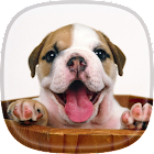 Puppy Live Wallpaper  Pictures of Cute Puppies icon