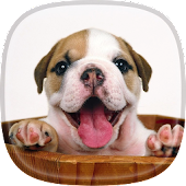 Puppy Live Wallpaper 🐕 Pictures of Cute Puppies
