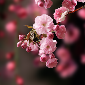 Download 540+ Background Bunga Rapuh HD Terbaru